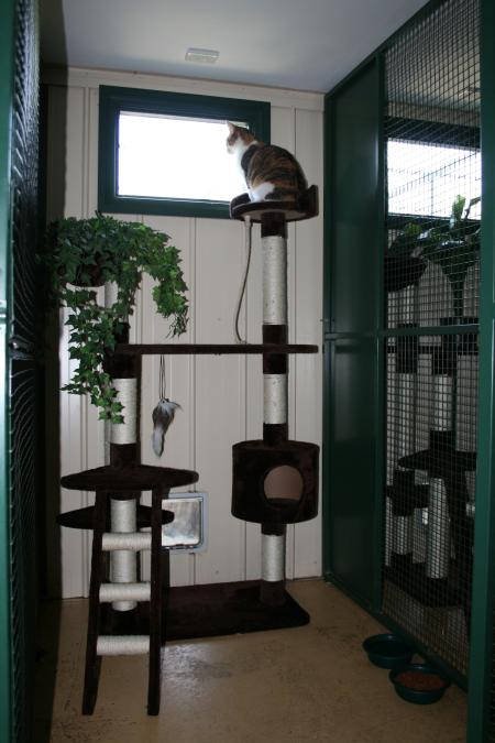 Mornington Peninsula Cattery